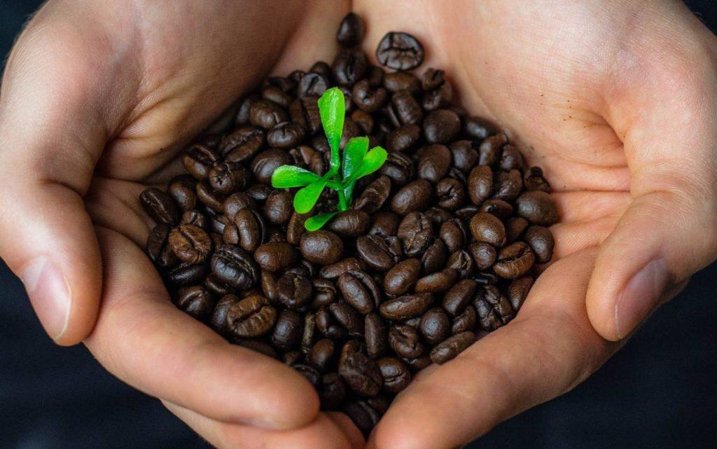 sustainability coffee