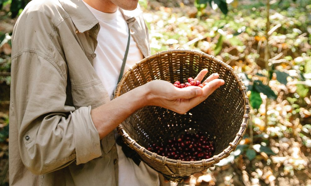 Why should micro coffee roasters care about sustainability?